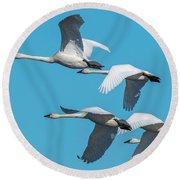 Tundra Swans In Flight Round Beach Towel