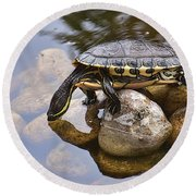 Turtle Drinking Water Round Beach Towel