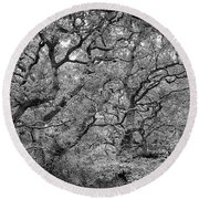Round Beach Towel featuring the photograph Twisted Forest by Nathan Bush