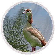 Visit And Hello From Egyptian Goose Round Beach Towel