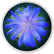 Vivid Blue Chicory Blossom Close-up With Its Delicate Petals And Stamen Round Beach Towel