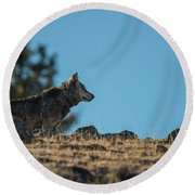 Round Beach Towel featuring the photograph W61 by Joshua Able's Wildlife