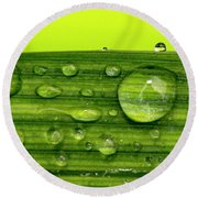 Water Drops On Leaf Round Beach Towel