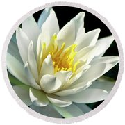 Round Beach Towel featuring the photograph Water Lily by Christina Rollo
