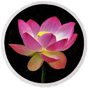Water Lily In The Light Round Beach Towel
