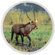 Waterbuck Round Beach Towel