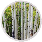 Round Beach Towel featuring the photograph White Bark Golden Forest by James BO Insogna