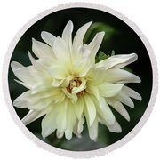 Round Beach Towel featuring the photograph White Dahlia Beauty by Dale Kincaid