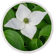White Dogwood Flower  Round Beach Towel