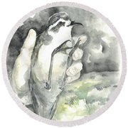 White-faced Storm-petrel Round Beach Towel