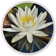 White Water Lily-square Round Beach Towel