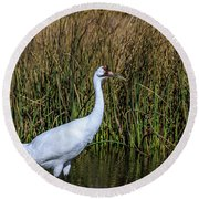 Whooping Crane In Pond Round Beach Towel