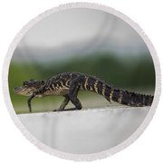 Why Did The Gator Cross The Road? Round Beach Towel