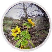 Wild Desert Sunflower Round Beach Towel