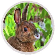 Wild Rabbit Round Beach Towel