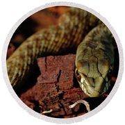 Wild Snake Malpolon Monspessulanus In A Tree Trunk Round Beach Towel