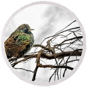 Winter Starling Waiting Round Beach Towel