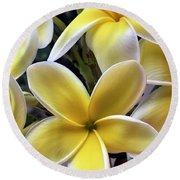 Yellow And White Plumeria Round Beach Towel