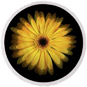 Round Beach Towel featuring the photograph Yellow Gerbera Daisy Repetitions by Bill Swartwout Fine Art Photography
