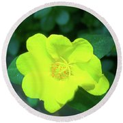 Yellow Hypericum - St Johns Wort Round Beach Towel