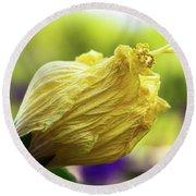Yellow Mature Hibiscus  Round Beach Towel