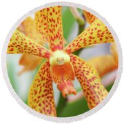 Yellow Spotted Spider Orchids Round Beach Towel