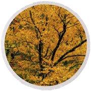 Yellow Tree Leaf Brilliance  Round Beach Towel