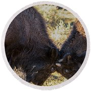 Round Beach Towel featuring the photograph Young Bison by Pete Federico