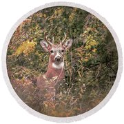 Round Beach Towel featuring the photograph Young Buck Portrait by Dan Sproul