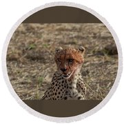 Young Cheetah Round Beach Towel