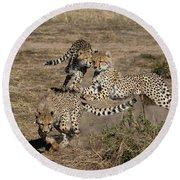 Young Cheetahs Round Beach Towel