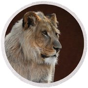 Young Male Lion Portrait Round Beach Towel