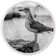 Young Seagull Round Beach Towel