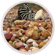 Zebra Nautilus Shell On Bauxite Beach Round Beach Towel