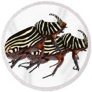 Zebra Pattern Rhinoceros Beetle 2 Round Beach Towel