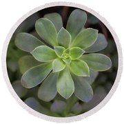 Round Beach Towel featuring the photograph Zen Is Green by Emily Johnson