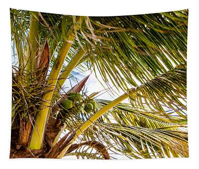 A Lovely Bunch Of Coconuts Tapestry