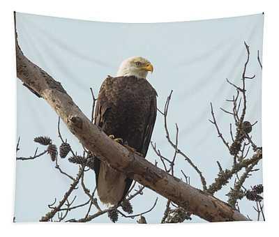 Resting Bald Eagle Tapestry