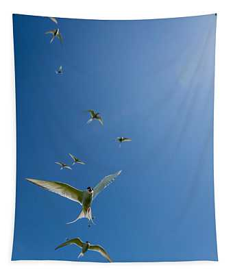 Arctic Terns Sterna Paradisaea, Flatey Tapestry