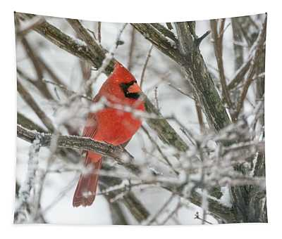Cardinal In The Snow  Tapestry