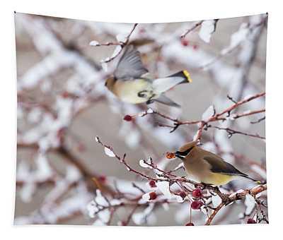 Cedar Waxwing Tapestry