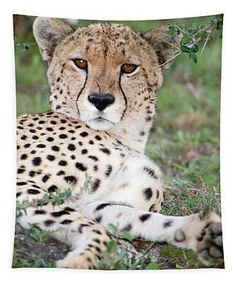 Cheetah Acinonyx Jubatus Resting Tapestry