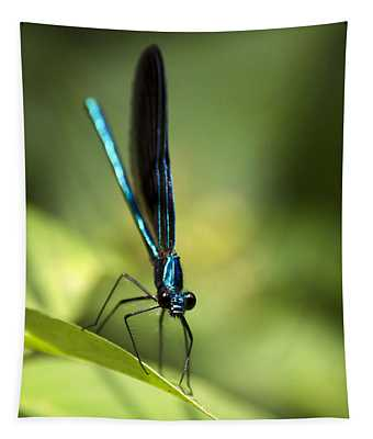 Ebony Jewelwing Damselfly Tapestry