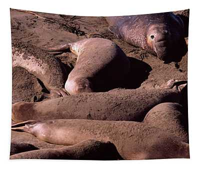 Elephant Seals On The Beach, San Luis Tapestry