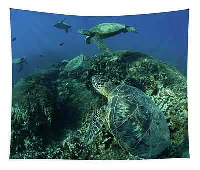 Endangered Green Sea Turtles Over Coral Tapestry