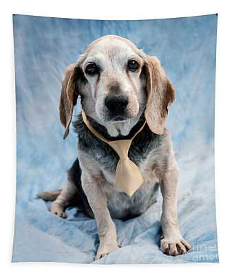 Kippy Beagle Senior Tapestry