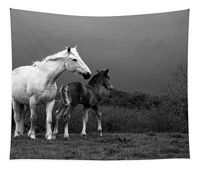 Mare And Foal, Co Derry, Ireland Tapestry
