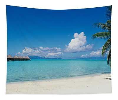 Palm Tree On The Beach, Moana Beach Tapestry