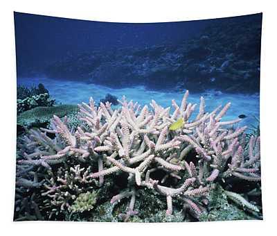 Plants Undersea, Okinawa Prefecture Tapestry
