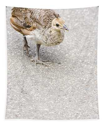 Small Baby Peacock Roaming On Pavement Tapestry